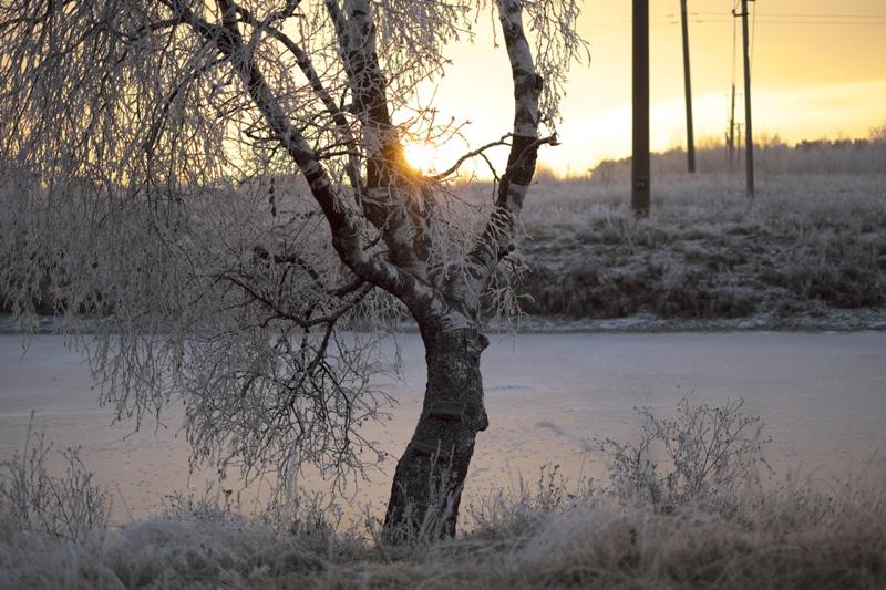 Морозный вечер на водопое