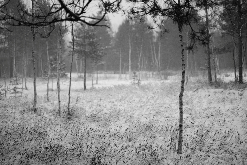 Бубяковское болото